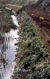 esempio lavori storici fiume Jato (PA) - 1985